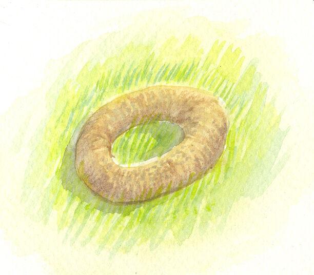 Doughnut fungus by sphenacodon