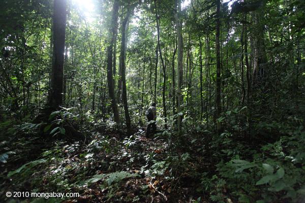 File:West-papua 0934.jpg