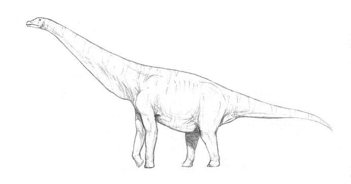 Neobrachius