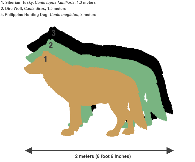 Image - Philippine Hunting Dog Size Comparison.png | Speculative ...