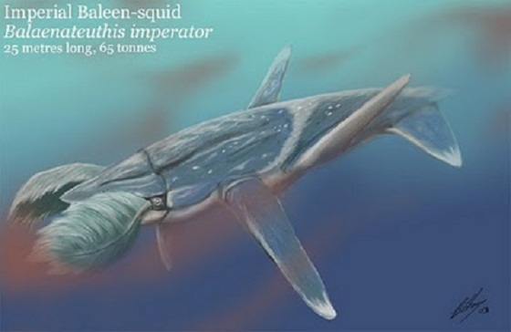 Imperial baleen-squid