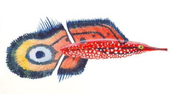 Eyed sea flag by sphenacodon