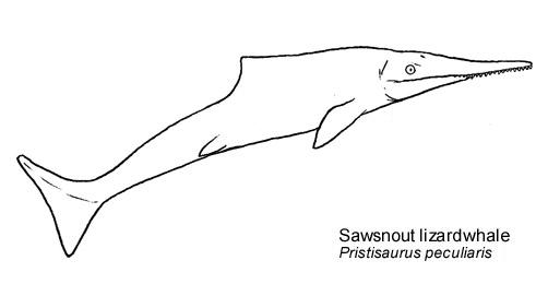 Sawsnoutbw