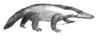 Badgerpus