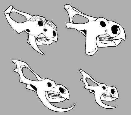 Skulls-0