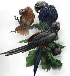 Carrion Parrots
