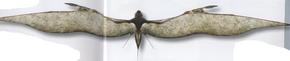 Velocipterus acrobatus