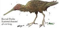 Spec Dinosauria: Neornithes
