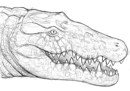 'Big croc'