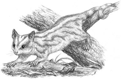 Nekopossum