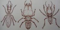 Skull Island Termite