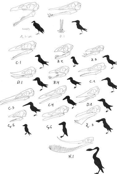 Toothedbirds