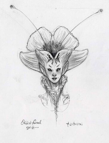 File:Orchidfacedsketch-1-.jpg