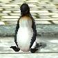 Penguincourtyard