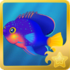 Blue Mauritius Pygmy Angelfish§Headericon