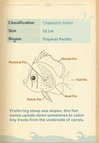 File:Hawaiian Butterflyfish§Aquapedia2.png