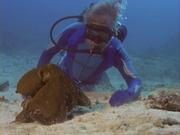 Case of the Sponge Bob 176