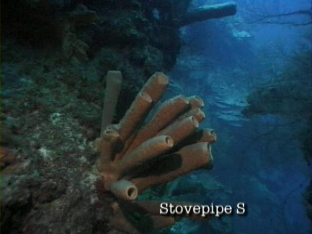 File:Case of the Sponge Bob 022.png