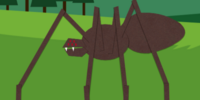 Canadian Barking Spider
