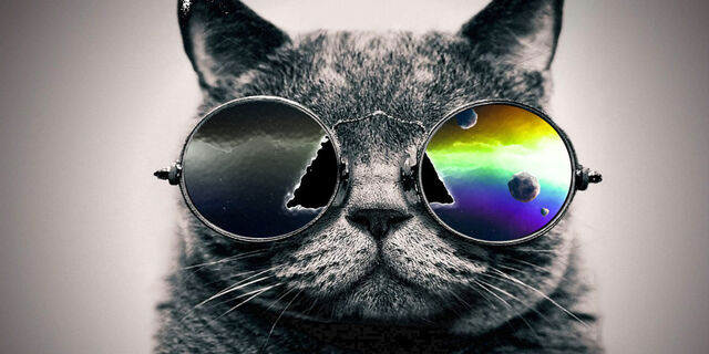 File:O-COOL-CAT-facebook.jpg