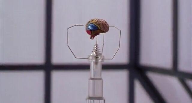 File:Third Brain.jpeg