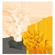 File:Asset Corals (Pre 06.19.2015).png
