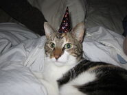 Party hat kitten4