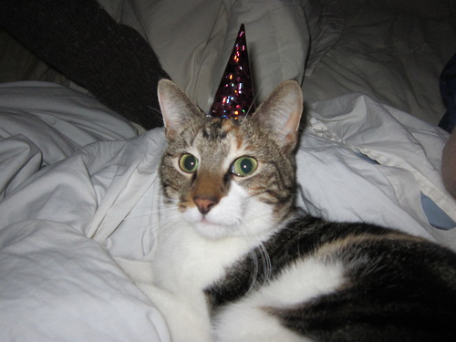 File:Party hat kitten4.jpg
