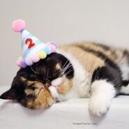 Party hat kitten3