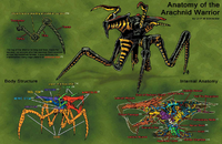 Anatomy of the Arachnid Warrior