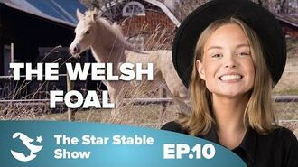 The Welsh Foal - The Star Stable Show -2.10