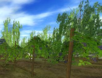 Vindruvs fält