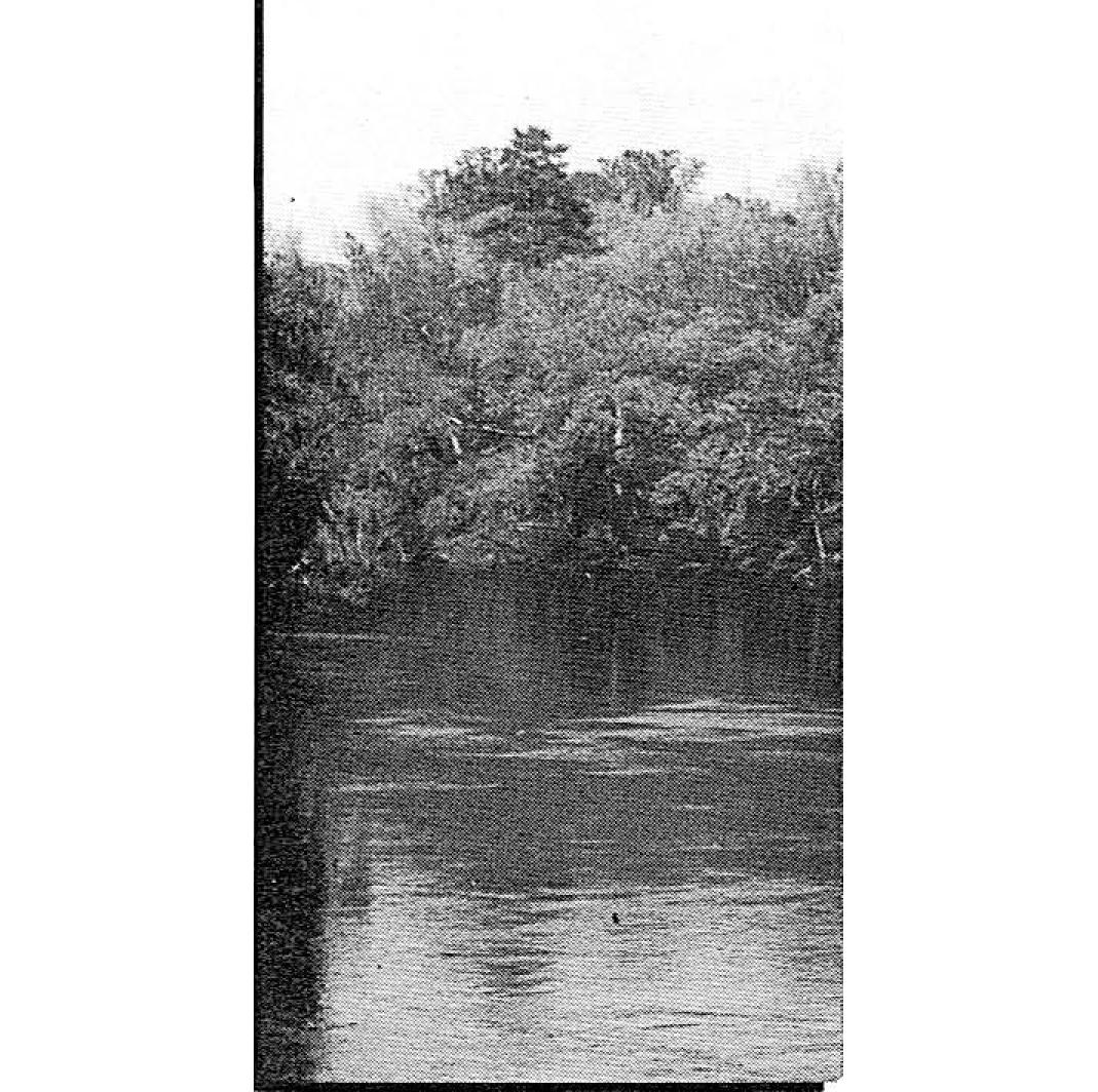 File:Terra surface.jpg