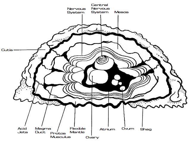 File:Janus hominidae physiology.jpg