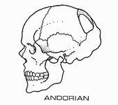 Andorian skull diagram