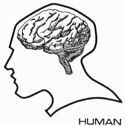 File:Human brain diagram.jpg