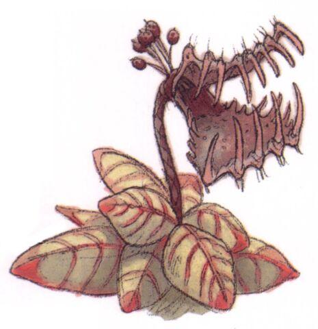 File:Tooke-trap plant.jpg