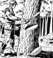 Greel Tree.jpg