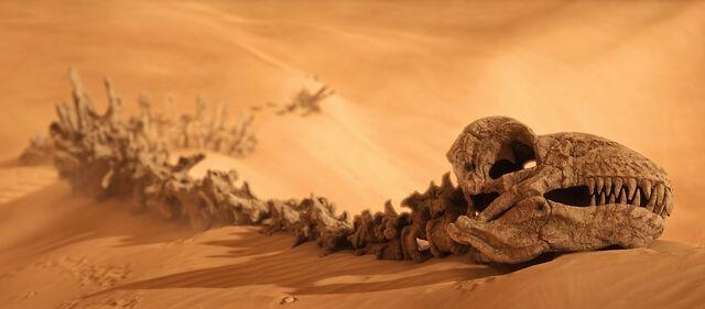 File:Krayt bones-Battlefront.jpg
