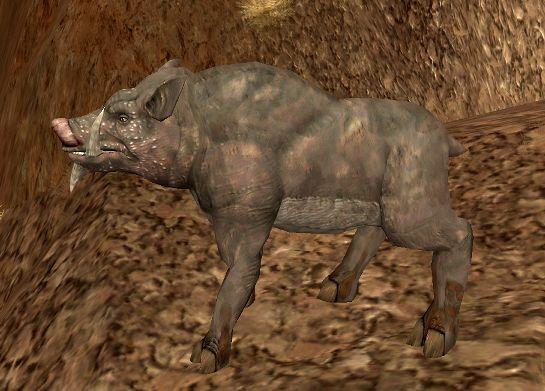 File:Zucca boar.jpg