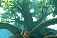 Zedalus Tree