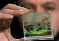 Pocket-sized aquarium.png