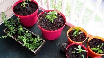 A Jillion Plants (Day 1244 - 4 21 13)