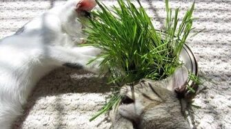 Eating Grass - Astronocats