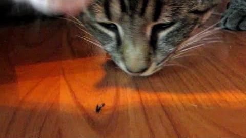 Sagan and Kepler - Bug Eating 2