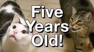Happy Birthday, Kitties! • 6.3.17