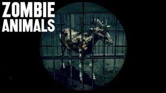 Zombie Animals