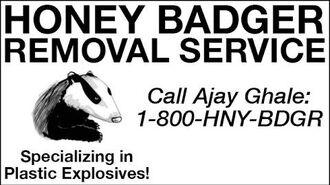 Honey Badger Removal Service