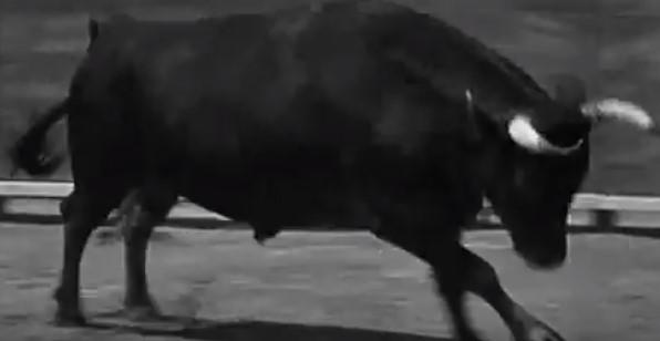 File:Angry Bull.jpg