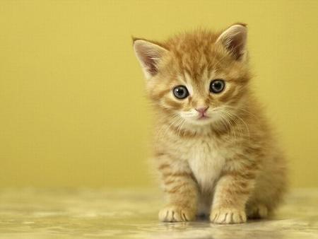 File:Gatos.jpg